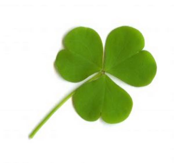 Clover Leaf Actual Size Image