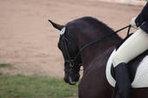 dressage rider 0.jpg Actual Size Image