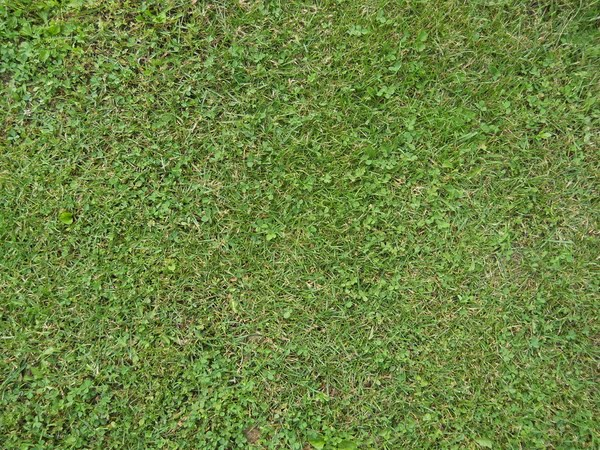 grass Actual Size Image