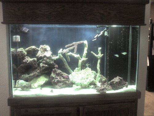 My fish tank Actual Size Image
